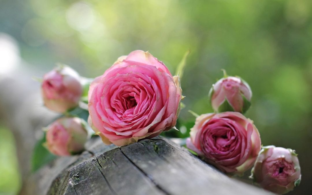 domotique pour jardin connecté